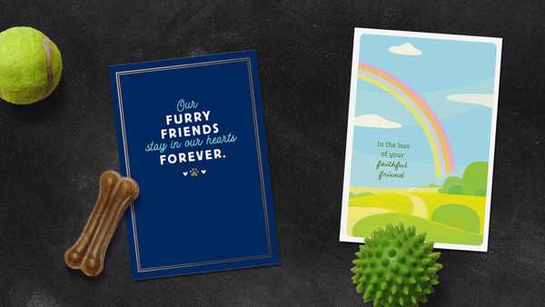 Two Hallmark pet sympathy cards on solid background with dog toys